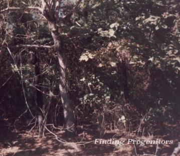 Meetze Cemetery 1985